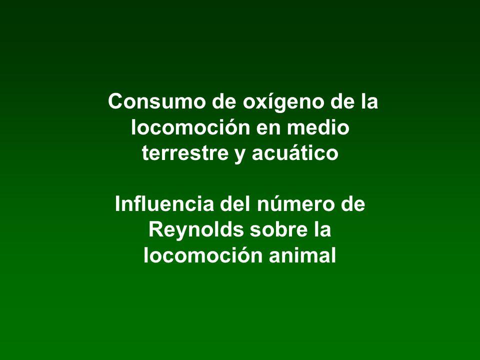 Consumo de oxígeno de la locomoción en medio terrestre y acuático Influencia del número de Reynolds sobre la locomoción animal