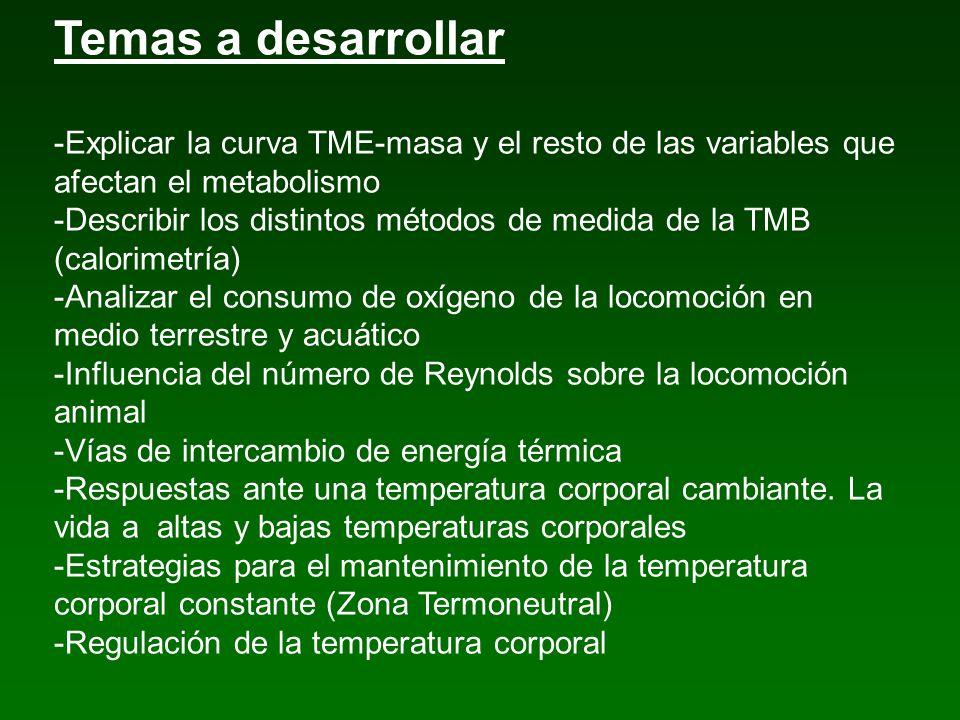 Temas a desarrollar -Explicar la curva TME-masa y el resto de las variables que afectan el metabolismo -Describir los distintos métodos de medida de l