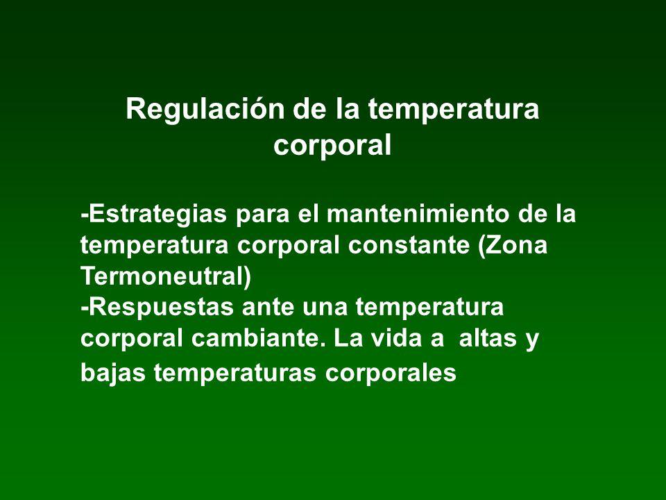 Regulación de la temperatura corporal -Estrategias para el mantenimiento de la temperatura corporal constante (Zona Termoneutral) -Respuestas ante una