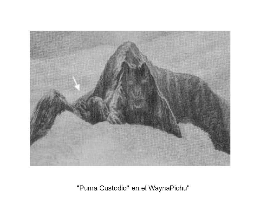 Puma Custodio en el WaynaPichu