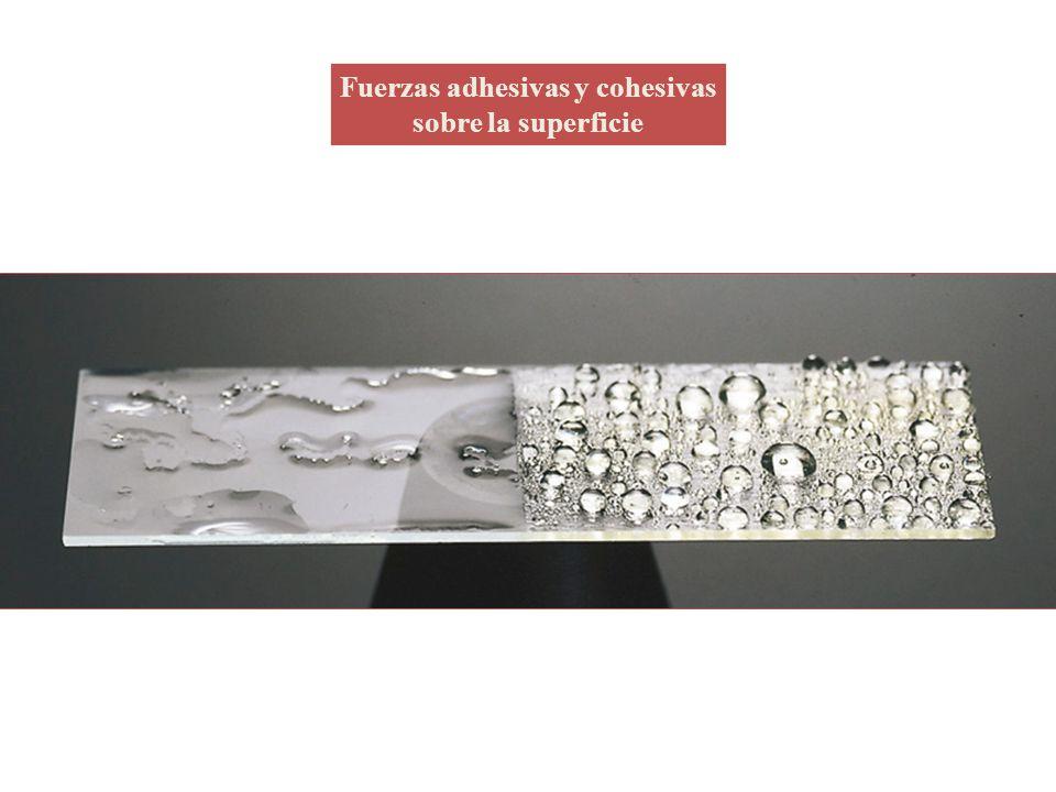 Fuerzas adhesivas y cohesivas sobre la superficie