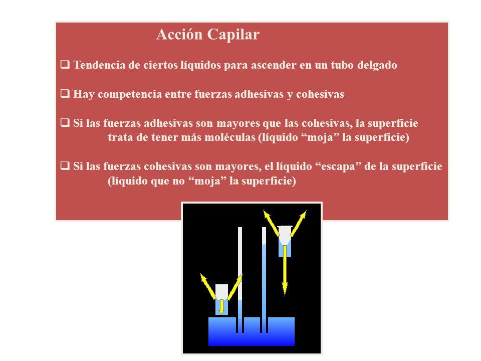 Acción Capilar Tendencia de ciertos líquidos para ascender en un tubo delgado Hay competencia entre fuerzas adhesivas y cohesivas Si las fuerzas adhes