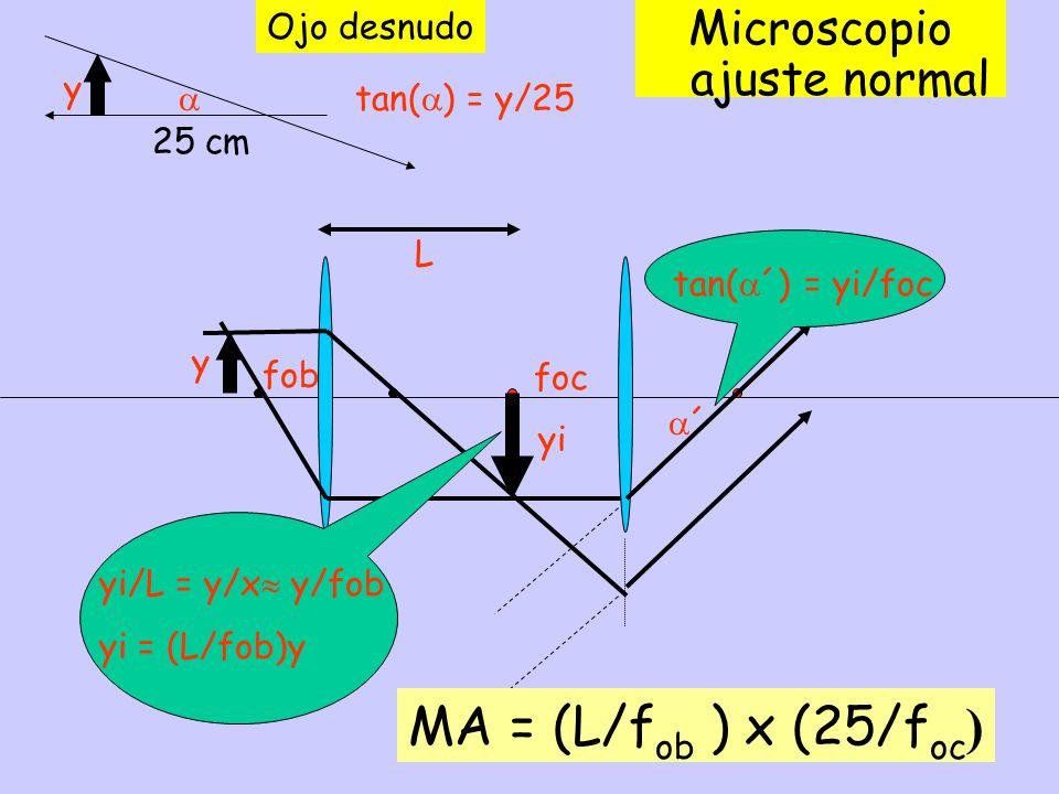 25 cm Ojo desnudo Microscopio ajuste normal ´ yi L y y fob foc tan( ) = y/25 tan( ´) = yi/foc yi/L = y/x y/fob yi = (L/fob)y MA = (L/f ob ) x (25/f oc