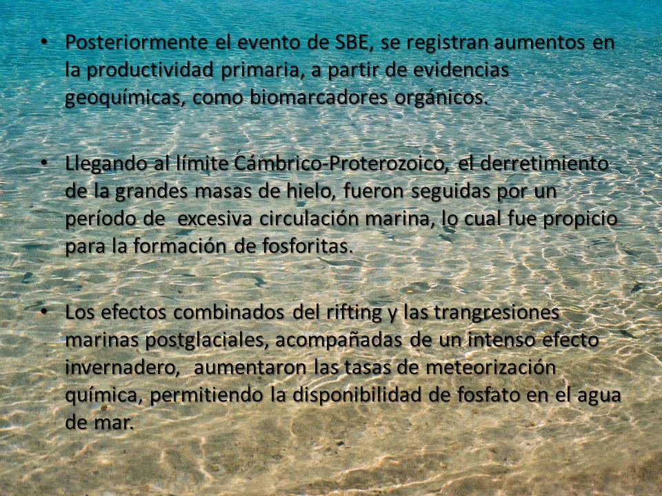 Posteriormente el evento de SBE, se registran aumentos en la productividad primaria, a partir de evidencias geoquímicas, como biomarcadores orgánicos.