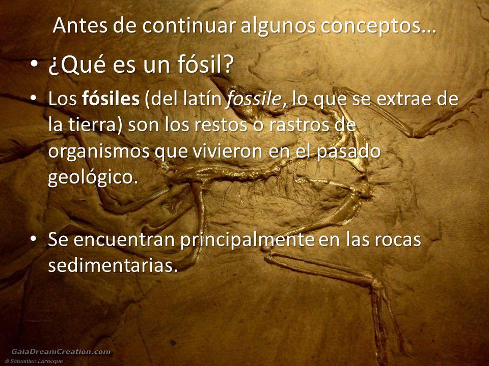 Antes de continuar algunos conceptos… ¿Qué es un fósil.