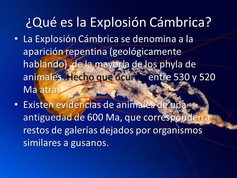 ¿Qué es la Explosión Cámbrica.