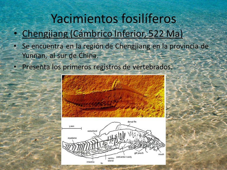 Yacimientos fosilíferos Chengjiang (Cámbrico Inferior, 522 Ma) Se encuentra en la región de Chengjiang en la provincia de Yunnan, al sur de China.
