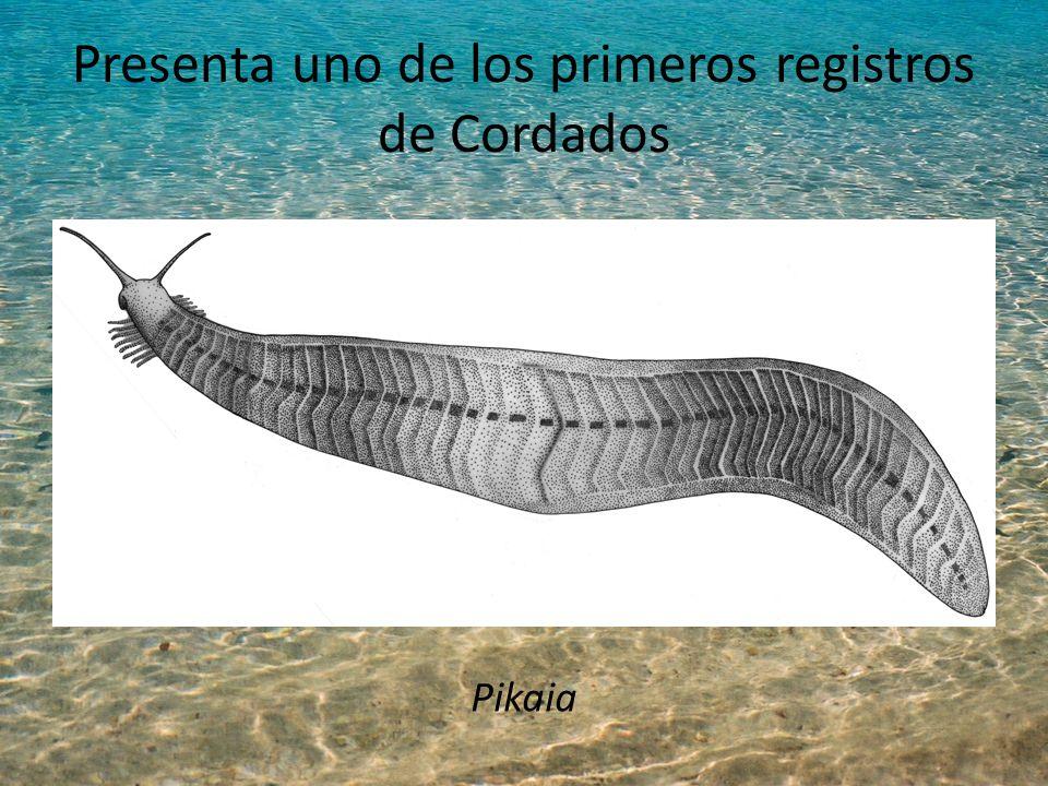 Presenta uno de los primeros registros de Cordados Pikaia