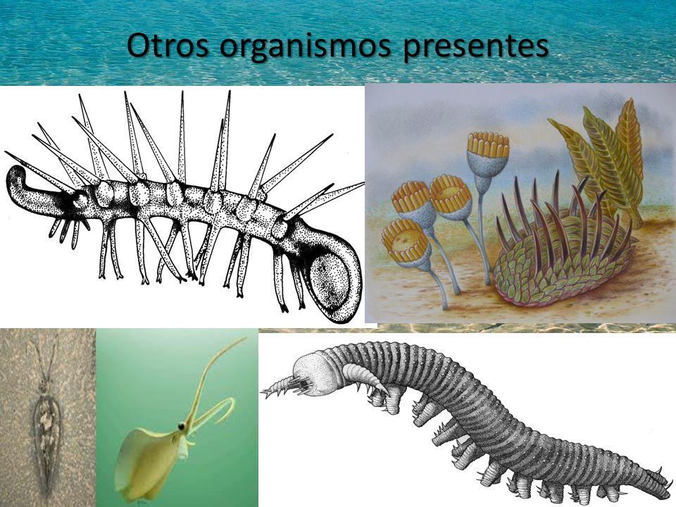 Otros organismos presentes