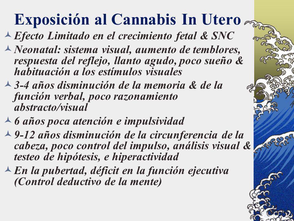 Exposición al Cannabis In Utero Efecto Limitado en el crecimiento fetal & SNC Neonatal: sistema visual, aumento de temblores, respuesta del reflejo, l