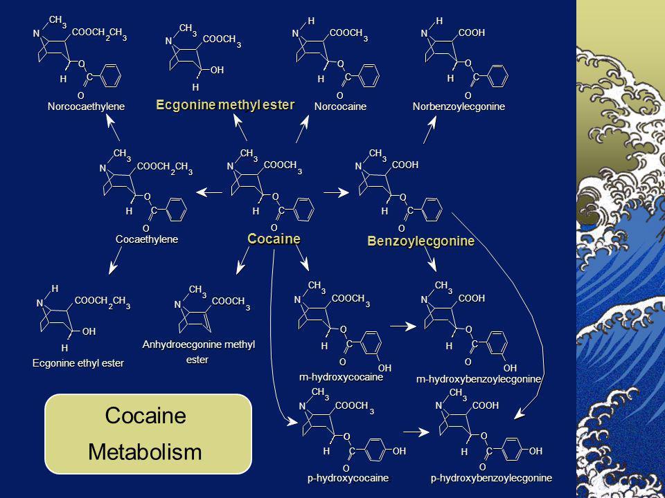 COOCH 3 3 3 3 3 2 CH 3 COOCH 2 CH 3 Ecgonine ethyl ester Norcocaine COOCH 2 CH 3 COOCH 2 CH 3 COOCH 2 CH 3 COOCH 2 CH 3 Cocaethylene Norcocaethylene A