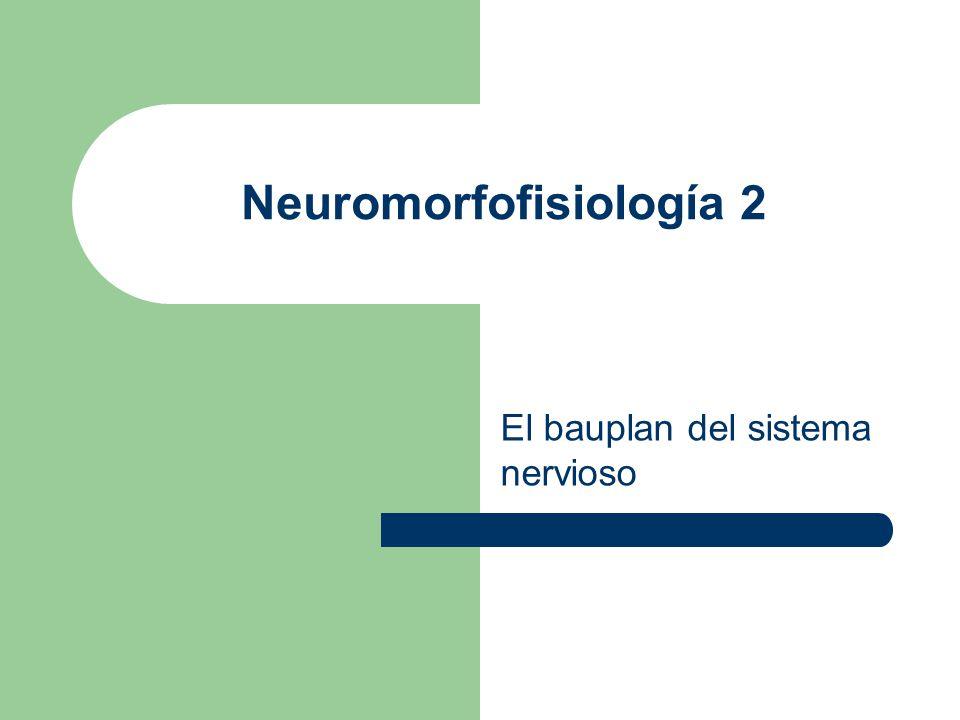 Tres formas de estudiar al sistema nervioso evolutivo Funciónal Morfológico