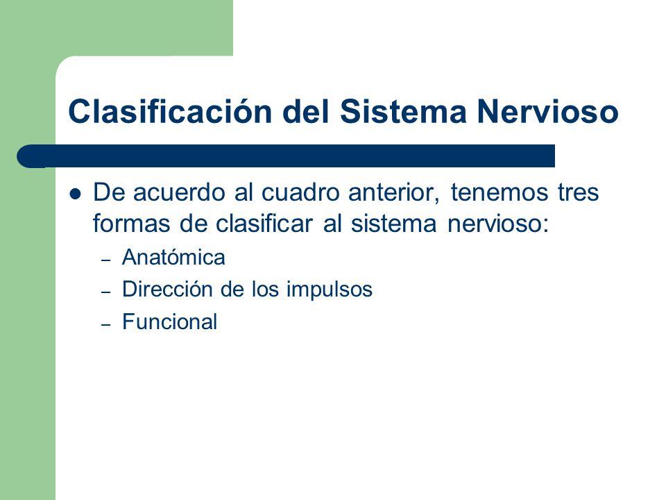 Desde el punto de vista anatómico lo más simple es: Sistema Nervioso Central Sistema Nervioso Periférico Pares craneales Nervios espinales Cerebro Médula espinal Sistema Nervioso central Sistema nervioso periférico