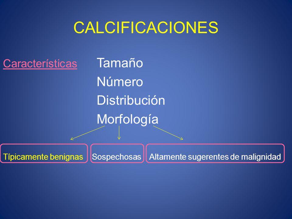 CALCIFICACIONES Características Tamaño Número Distribución Morfología Típicamente benignas Sospechosas Altamente sugerentes de malignidad