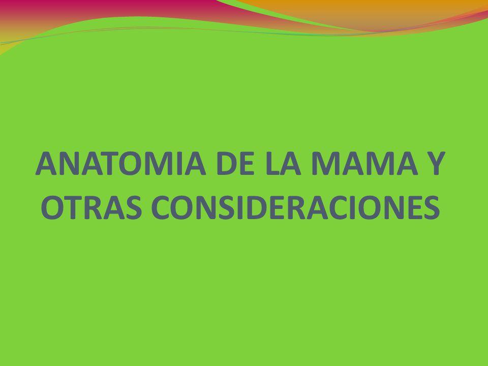 ANATOMÍA DE LA MAMA anatomía externa Las mamas son glándulas tuboalveolares de secreción externa, son embriológicamente glándulas sudoríparas modificadas en su esxtructura y función Todas las mamas son aptas para la lactancia Durante el embarazo sufre un gran desarrollo, se forman nuevos alvéolos y los conductos se dividen.