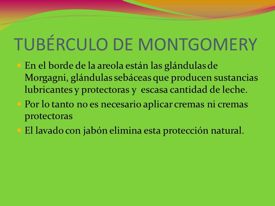 TUBÉRCULO DE MONTGOMERY En el borde de la areola están las glándulas de Morgagni, glándulas sebáceas que producen sustancias lubricantes y protectoras