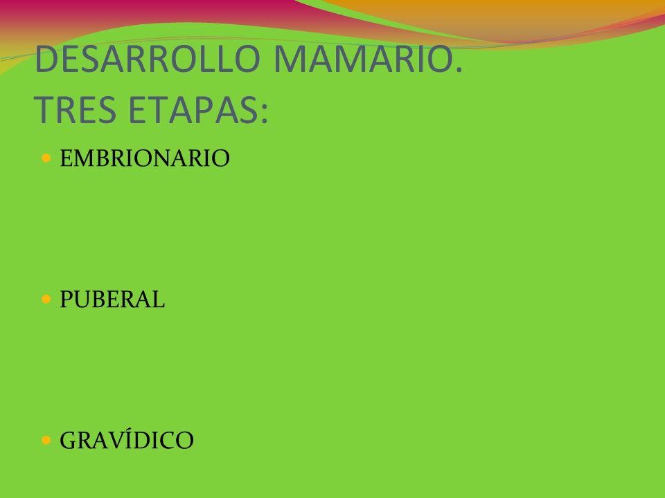 DESARROLLO MAMARIO. TRES ETAPAS: EMBRIONARIO PUBERAL GRAVÍDICO