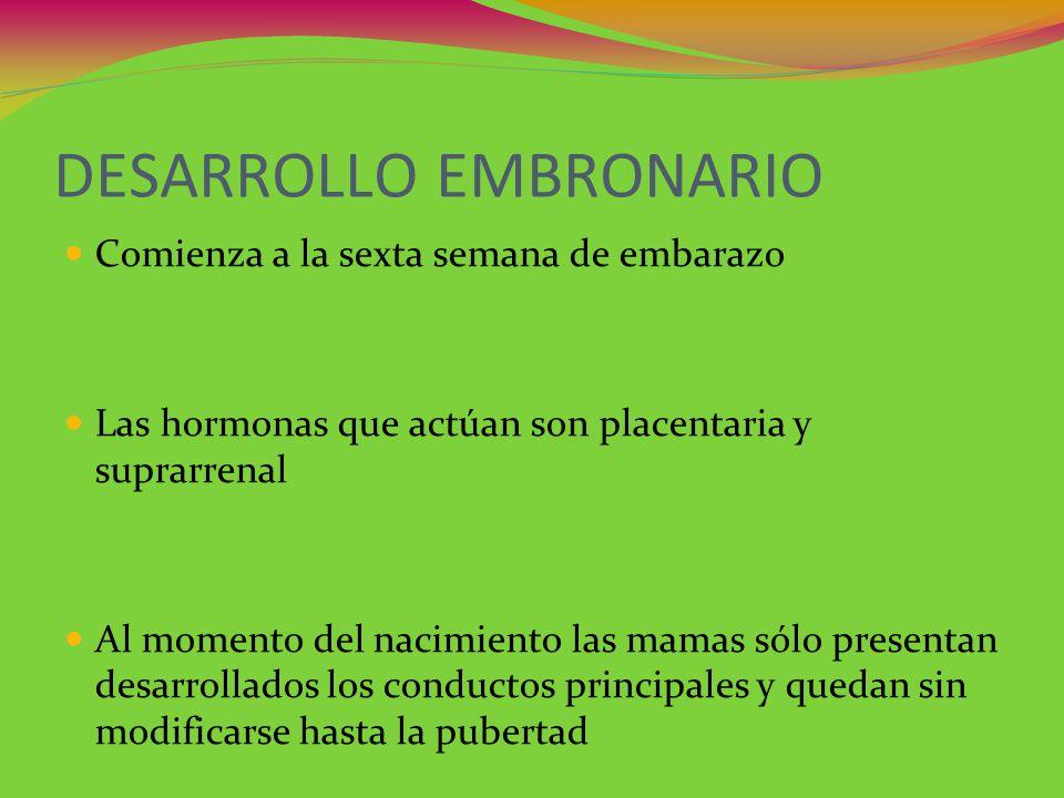 DESARROLLO EMBRONARIO Comienza a la sexta semana de embarazo Las hormonas que actúan son placentaria y suprarrenal Al momento del nacimiento las mamas