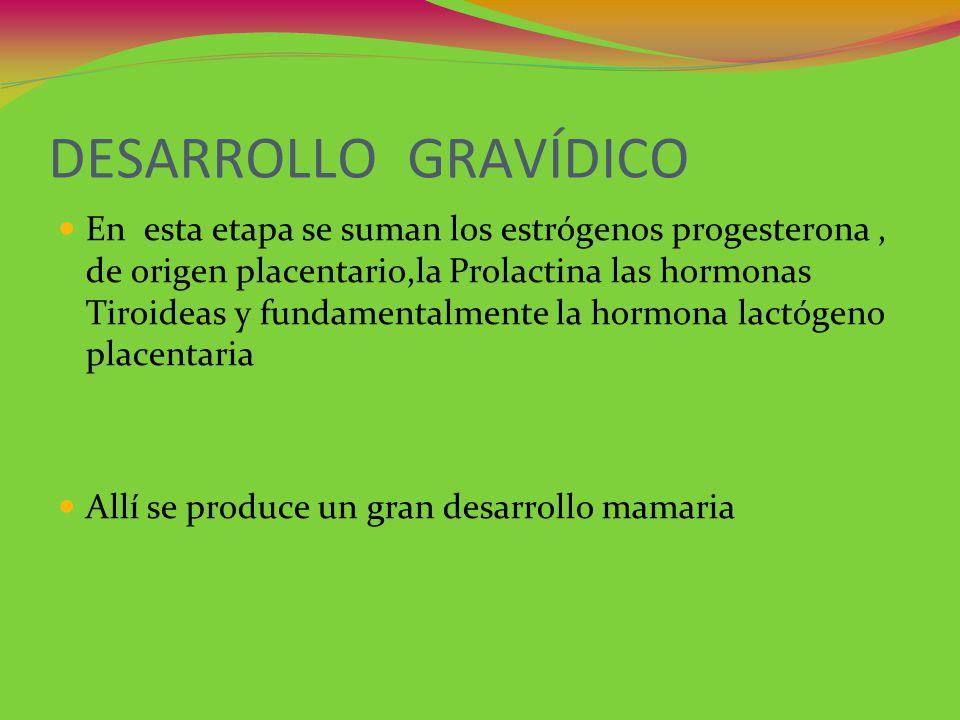 DESARROLLO GRAVÍDICO En esta etapa se suman los estrógenos progesterona, de origen placentario,la Prolactina las hormonas Tiroideas y fundamentalmente