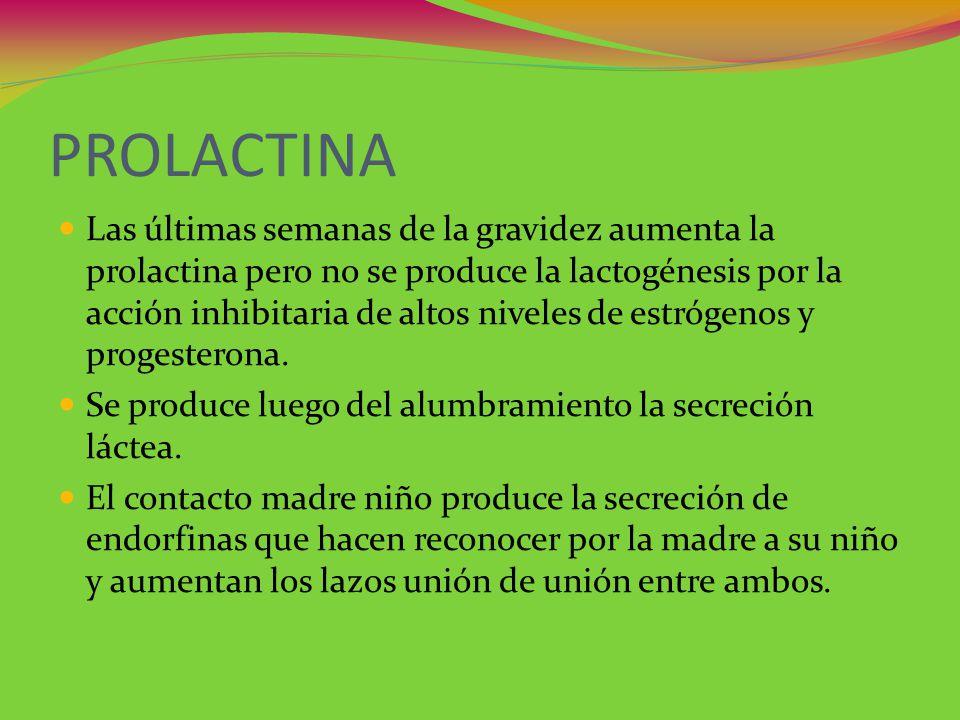 PROLACTINA Las últimas semanas de la gravidez aumenta la prolactina pero no se produce la lactogénesis por la acción inhibitaria de altos niveles de e