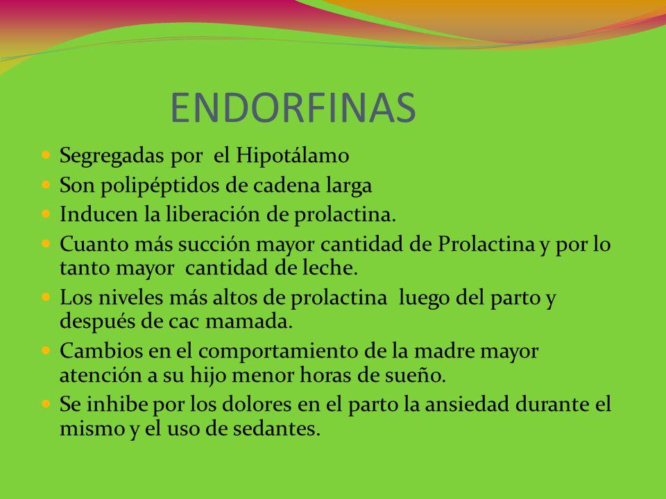 ENDORFINAS Segregadas por el Hipotálamo Son polipéptidos de cadena larga Inducen la liberación de prolactina. Cuanto más succión mayor cantidad de Pro