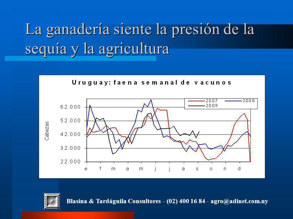 Blasina & Tardáguila Consultores - (02) 400 16 84 - agro@adinet.com.uy La ganadería siente la presión de la sequía y la agricultura