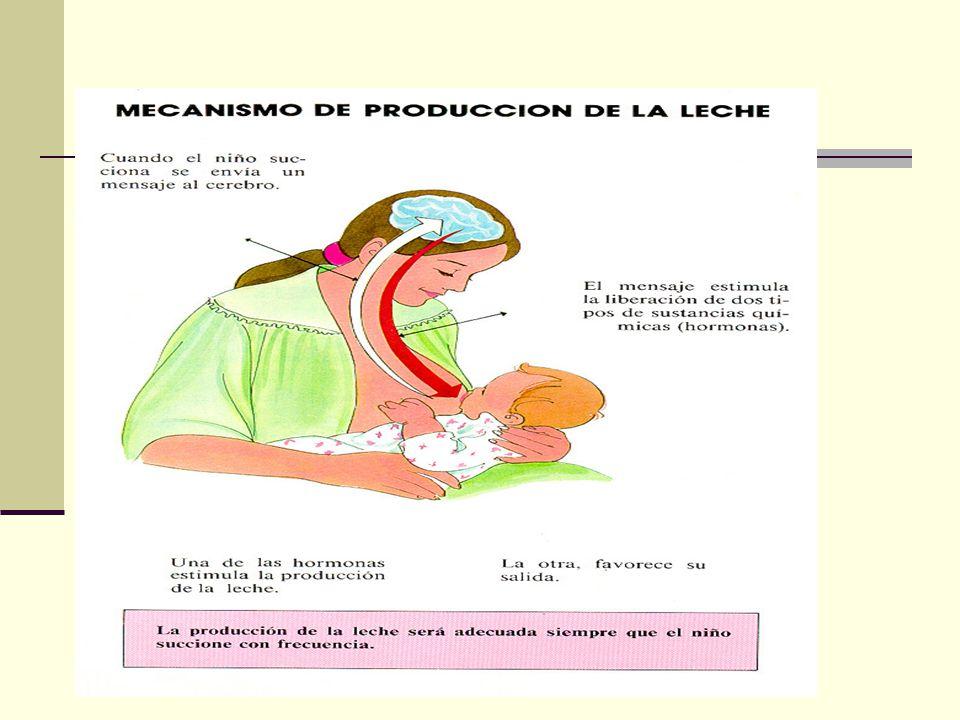 Patologias propias de la Lactancia SENOS: Congestión mamaria Conducto obstruido Quiste lácteo por retención Absceso mamario Mastitis Grietas del pezón y pezón doloroso