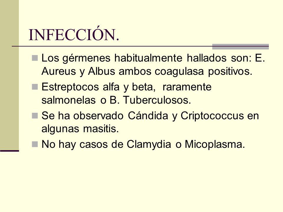 INFECCIÓN. Los gérmenes habitualmente hallados son: E. Aureus y Albus ambos coagulasa positivos. Estreptocos alfa y beta, raramente salmonelas o B. Tu