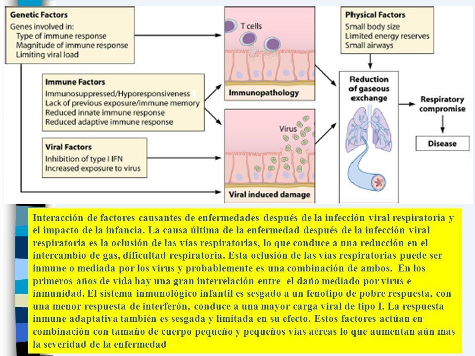 Interacción de factores causantes de enfermedades después de la infección viral respiratoria y el impacto de la infancia. La causa última de la enferm