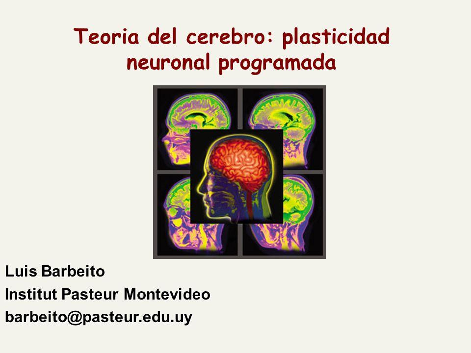 Teoria del cerebro: plasticidad neuronal programada Luis Barbeito Institut Pasteur Montevideo barbeito@pasteur.edu.uy