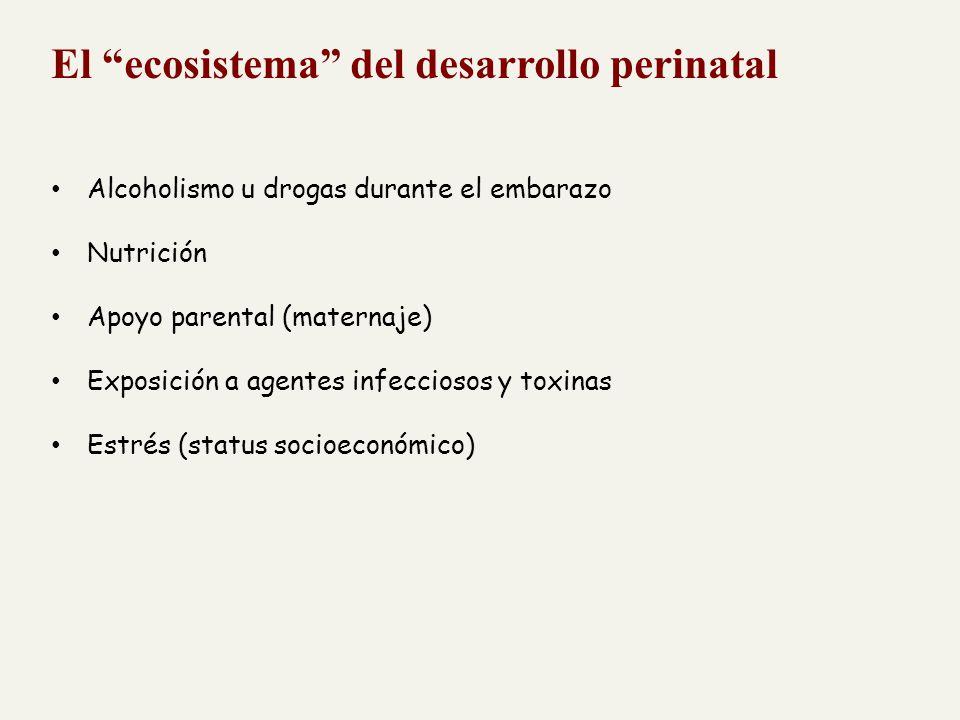 El ecosistema del desarrollo perinatal Alcoholismo u drogas durante el embarazo Nutrición Apoyo parental (maternaje) Exposición a agentes infecciosos y toxinas Estrés (status socioeconómico)