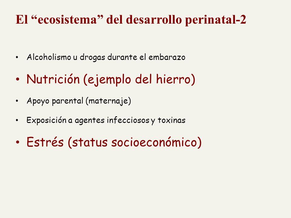 El ecosistema del desarrollo perinatal-2 Alcoholismo u drogas durante el embarazo Nutrición (ejemplo del hierro) Apoyo parental (maternaje) Exposición a agentes infecciosos y toxinas Estrés (status socioeconómico)