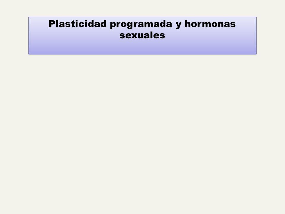 Plasticidad programada y hormonas sexuales