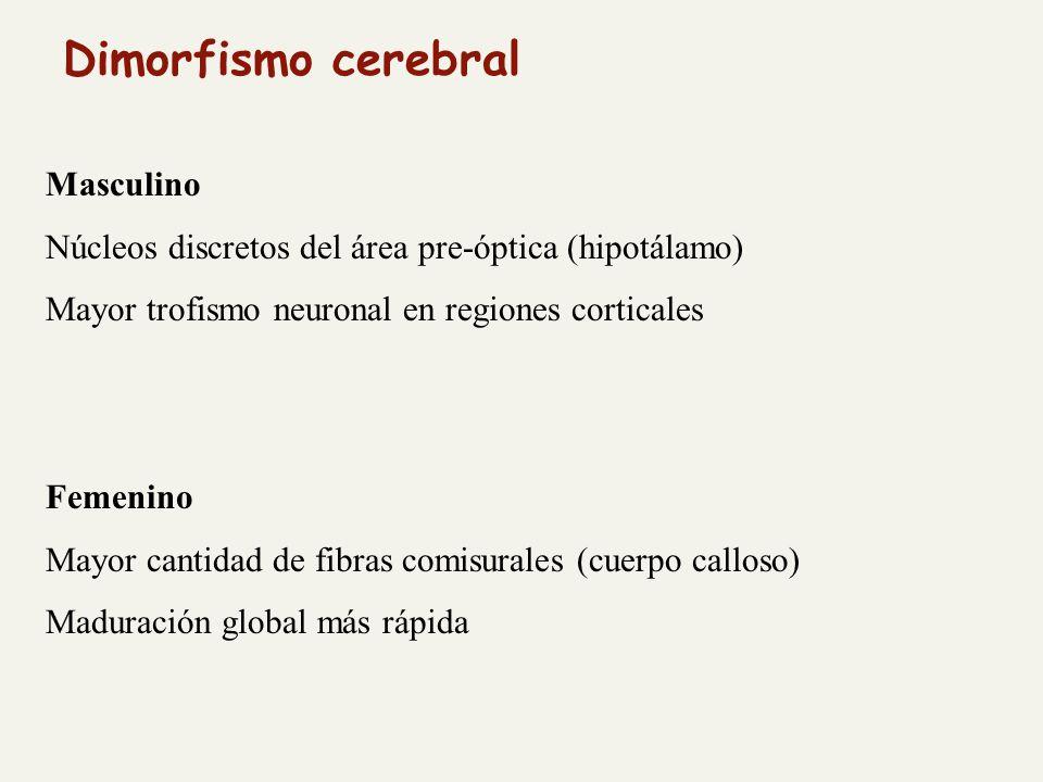 Masculino Núcleos discretos del área pre-óptica (hipotálamo) Mayor trofismo neuronal en regiones corticales Femenino Mayor cantidad de fibras comisurales (cuerpo calloso) Maduración global más rápida