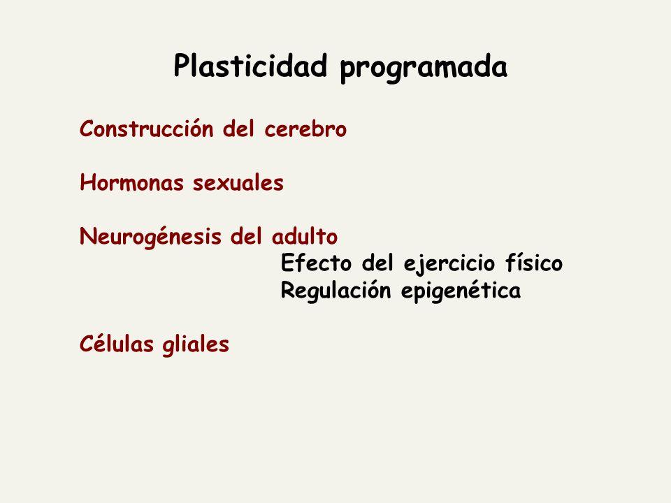 Plasticidad programada Construcción del cerebro Hormonas sexuales Neurogénesis del adulto Efecto del ejercicio físico Regulación epigenética Células g