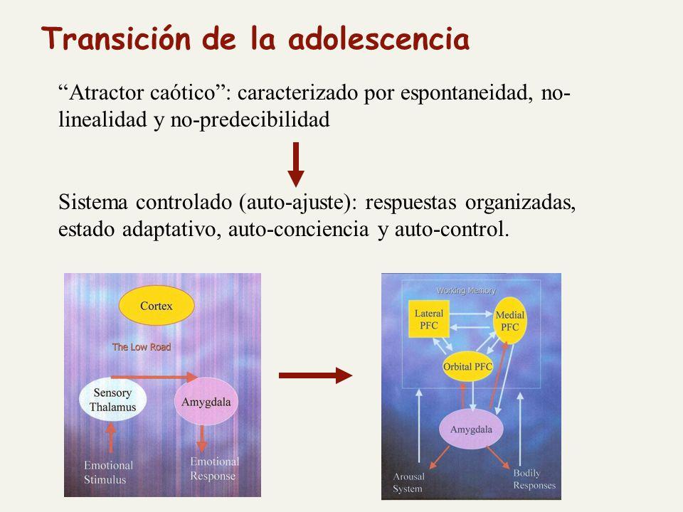 Atractor caótico: caracterizado por espontaneidad, no- linealidad y no-predecibilidad Sistema controlado (auto-ajuste): respuestas organizadas, estado adaptativo, auto-conciencia y auto-control.