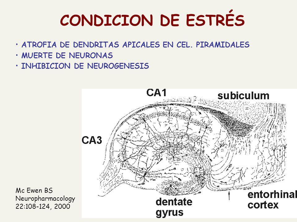 CONDICION DE ESTRÉS ATROFIA DE DENDRITAS APICALES EN CEL. PIRAMIDALES MUERTE DE NEURONAS INHIBICION DE NEUROGENESIS Mc Ewen BS Neuropharmacology 22:10