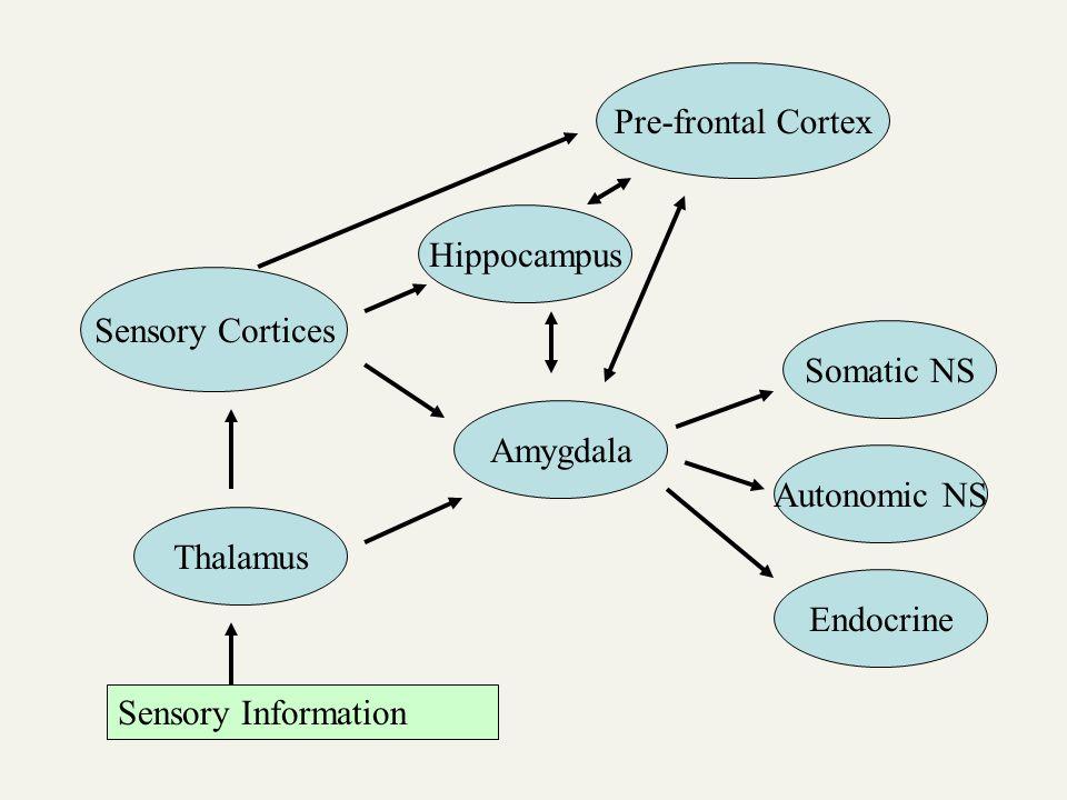 Thalamus Sensory Information Sensory Cortices Amygdala Somatic NS Autonomic NS Endocrine Hippocampus Pre-frontal Cortex