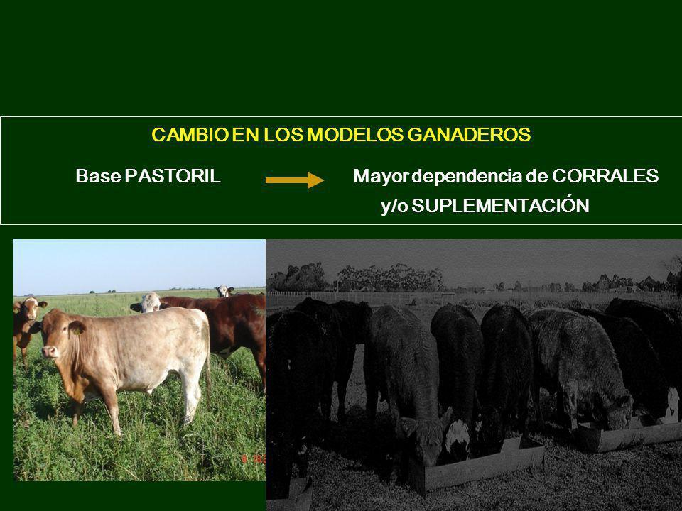 CAMBIO EN LOS MODELOS GANADEROS Base PASTORIL Mayor dependencia de CORRALES y/o SUPLEMENTACIÓN