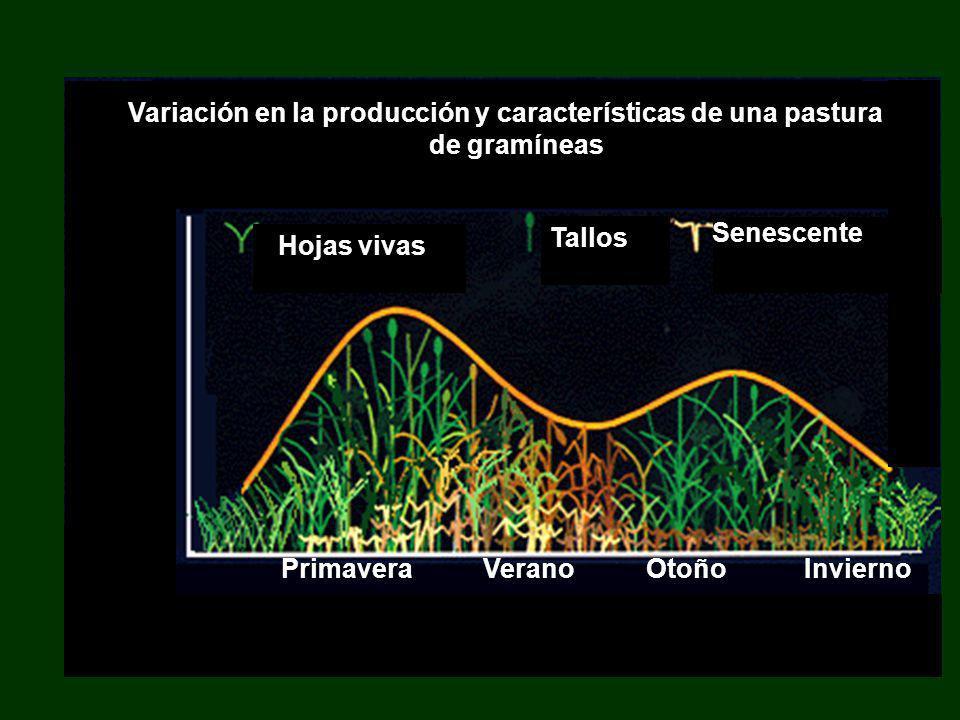 Senescente Primavera Verano Otoño Invierno Variación en la producción y características de una pastura de gramíneas Hojas vivas Tallos