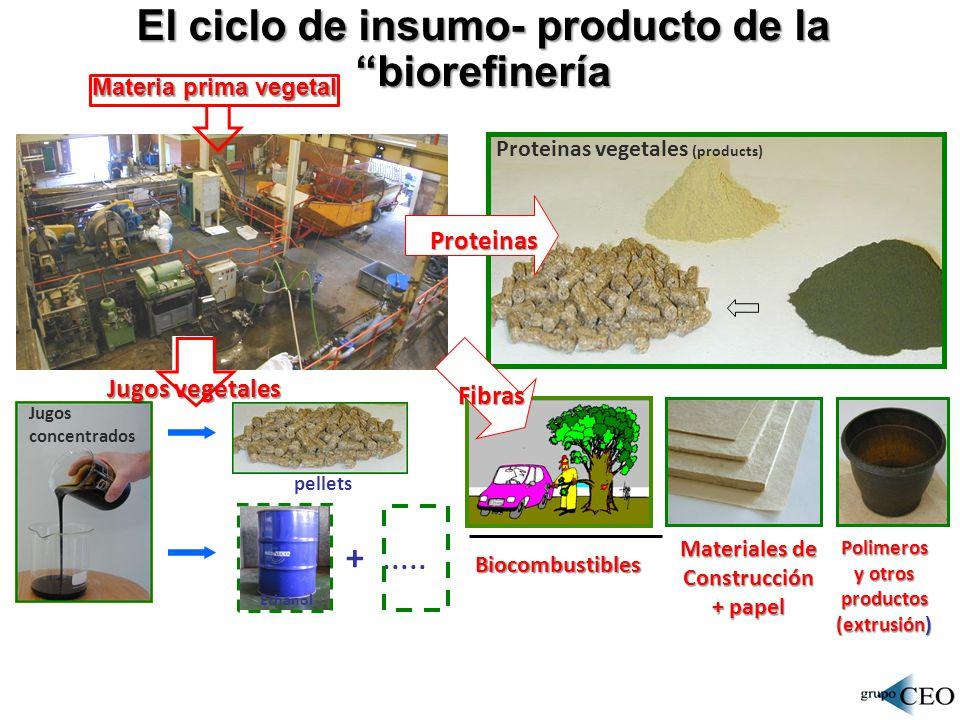 Estructura de las cadenas de valor de la bioeconomía SECTORES / MERCADOS / PRODUCTOS PRODUCTOS Transporte Textiles Alimentación Ambiente Industria: anticorrosivos, tratamiento s de aguas, purificación de gases, lubricantes especiales, empaques.