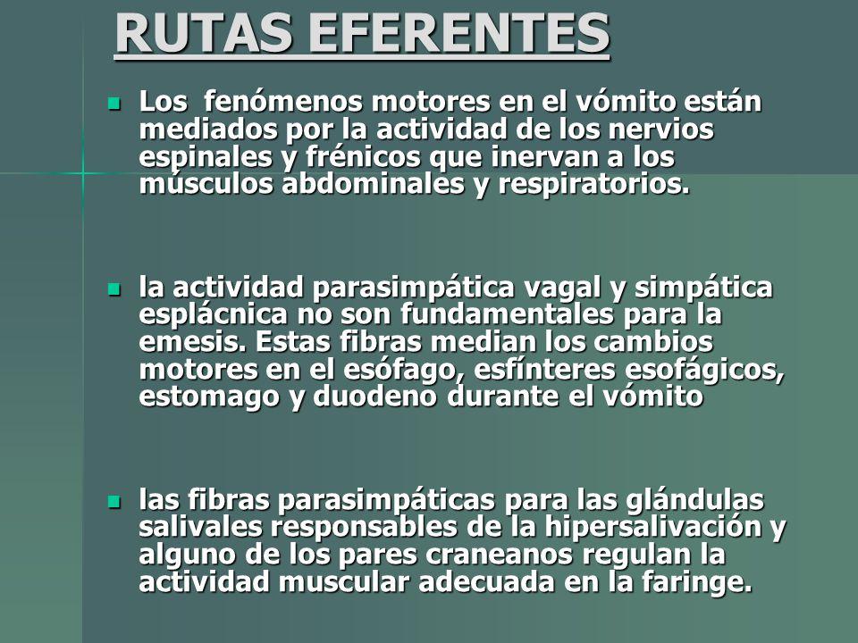RUTAS EFERENTES Los fenómenos motores en el vómito están mediados por la actividad de los nervios espinales y frénicos que inervan a los músculos abdo