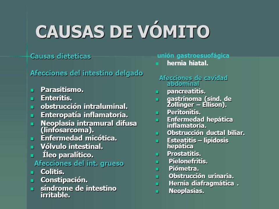 CAUSAS DE VÓMITO Causas dieteticas Afecciones del intestino delgado Parasitismo. Parasitismo. Enteritis. Enteritis. obstrucción intraluminal. obstrucc
