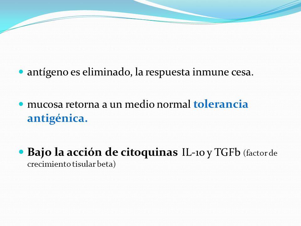 antígeno es eliminado, la respuesta inmune cesa. mucosa retorna a un medio normal tolerancia antigénica. Bajo la acción de citoquinas IL-10 y TGFb (fa