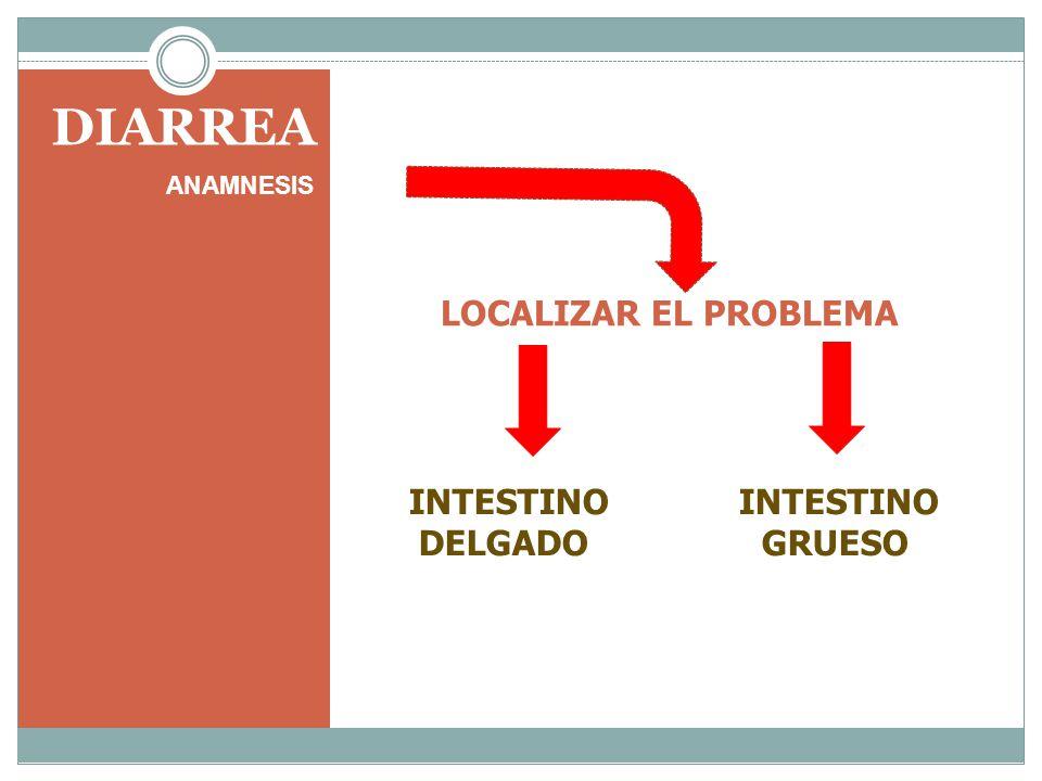 DIARREA ANAMNESIS LOCALIZAR EL PROBLEMA INTESTINO DELGADO GRUESO
