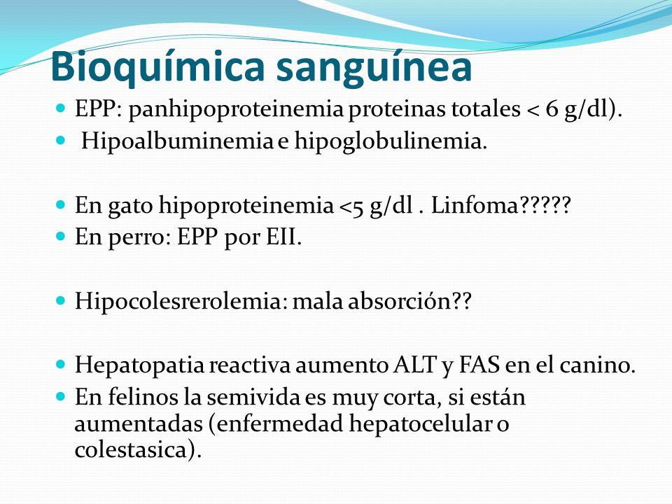 Bioquímica sanguínea EPP: panhipoproteinemia proteinas totales < 6 g/dl). Hipoalbuminemia e hipoglobulinemia. En gato hipoproteinemia <5 g/dl. Linfoma