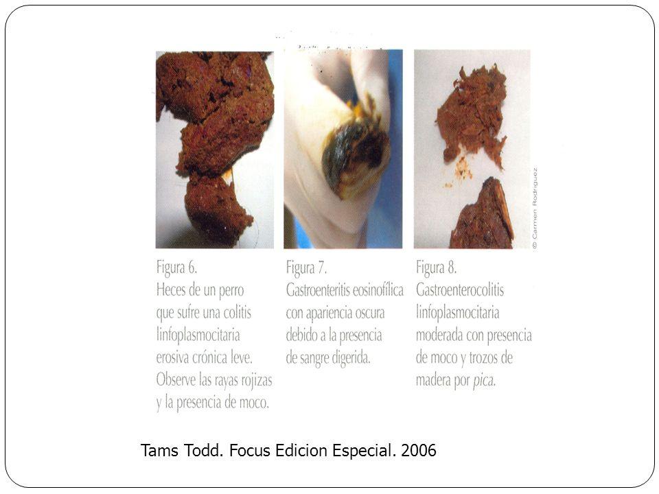 Tams Todd. Focus Edicion Especial. 2006