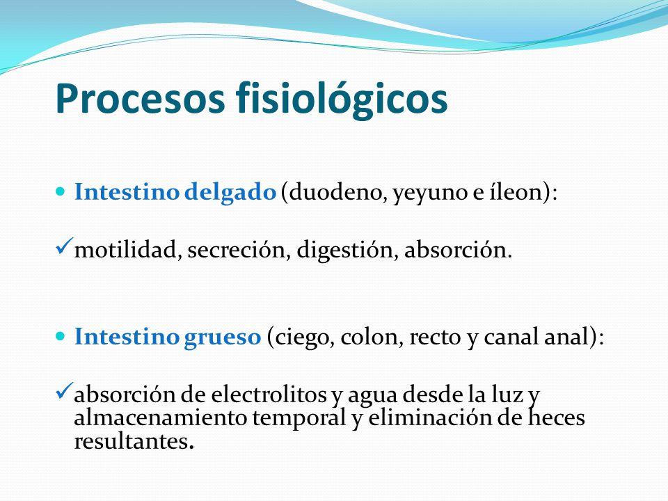 Fisiopatología: Es una Respuesta Inmune inapropiada ante los antígenos que normalmente son tolerados (bacterias y alimentos).