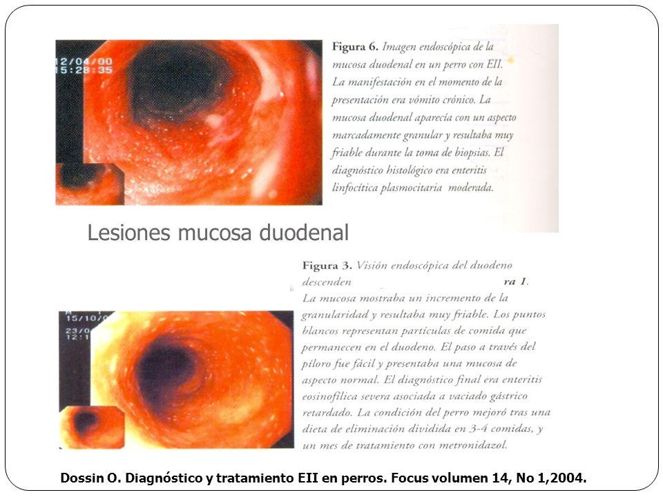 Dossin O. Diagnóstico y tratamiento EII en perros. Focus volumen 14, No 1,2004. Lesiones mucosa duodenal
