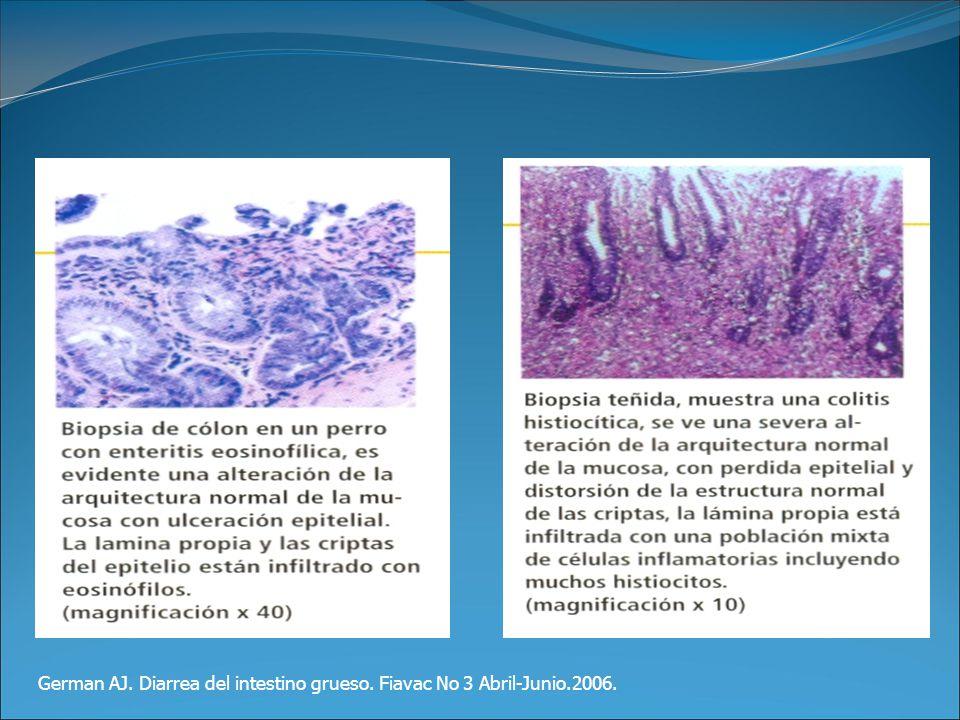 German AJ. Diarrea del intestino grueso. Fiavac No 3 Abril-Junio.2006.